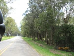 paisaje de eucapiltus, con la harley de La Barra a La Paloma, Uruguay