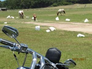 """nuestra harley en """"el paraiso"""" Cabo Polonio, Uruguay"""