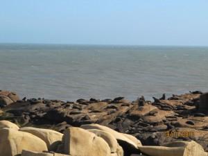en la ruta con la Harley, lobos de mar en Cabo Polonio