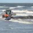 Rescate de una ballena que ha llegado a la playa de Carrasco! Otro día de trámites, ya quedan menos! A decir verdad, estoy gratamente sorprendida de la eficiencia en general. […]
