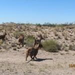 rutas en harley Barcelona-Patagonia Argentina