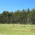 Eucaliptus de Montevideo a Piriapolis