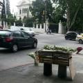 Venta de jazmin en Montevideo