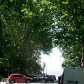 Arboles de Montevideo