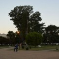 Plaza de San Martin, Venado Tuerto